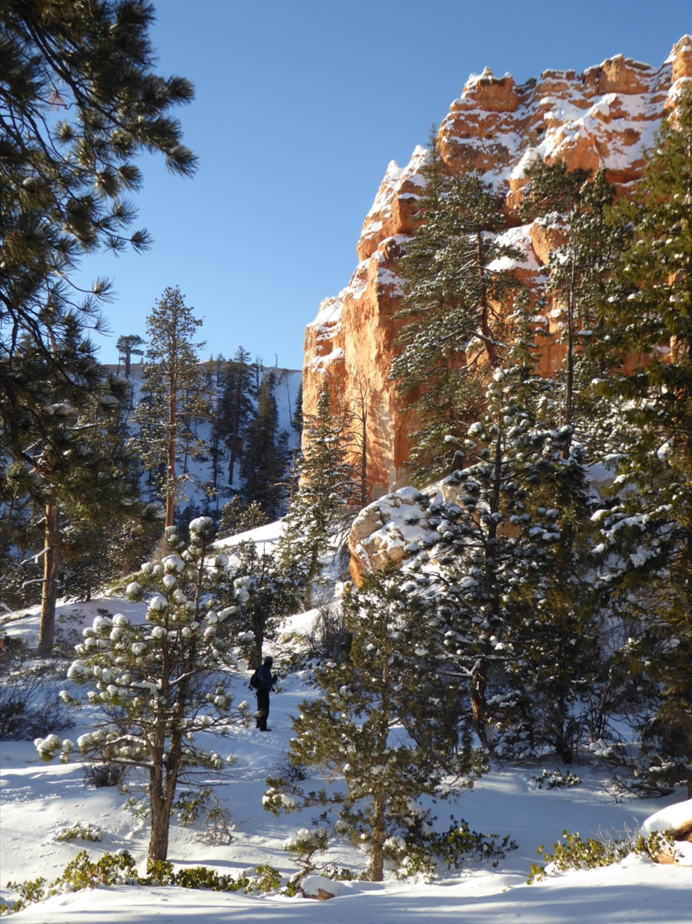 Fir and Red Rock